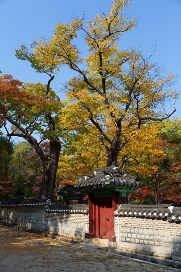 秋天在Changdeok宫殿公园  免版税库存图片