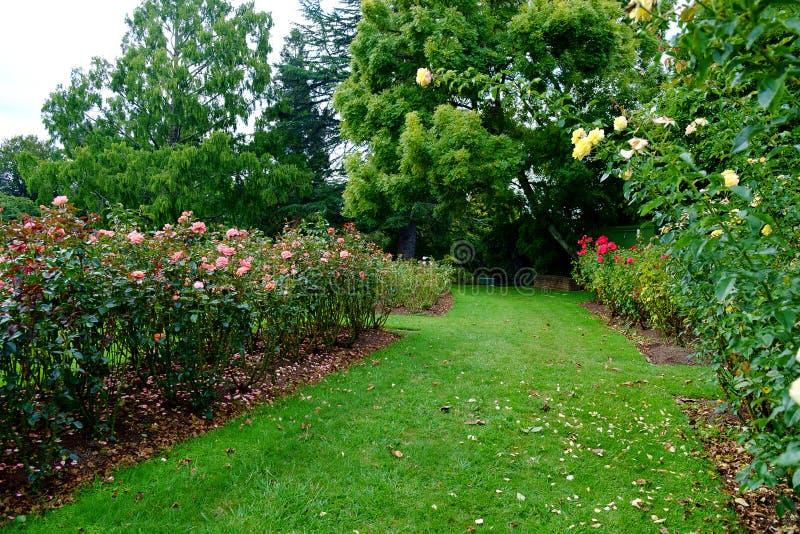秋天在Te Awamutu玫瑰园里, Te Awamutu, Waipa,怀卡托新西兰, NZ 免版税图库摄影