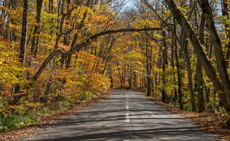 秋天在Towada的颜色季节 库存图片