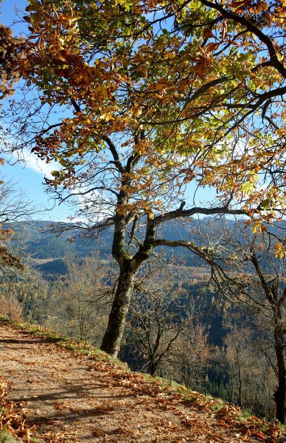 秋天在Val di Fiemme 免版税库存照片