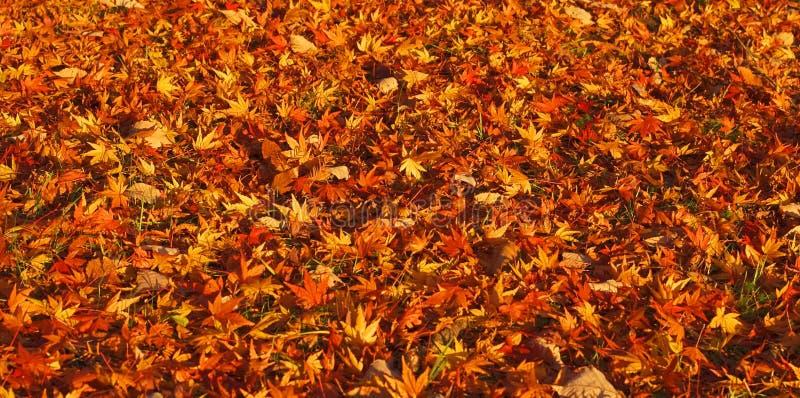 秋天地毯 免版税库存图片
