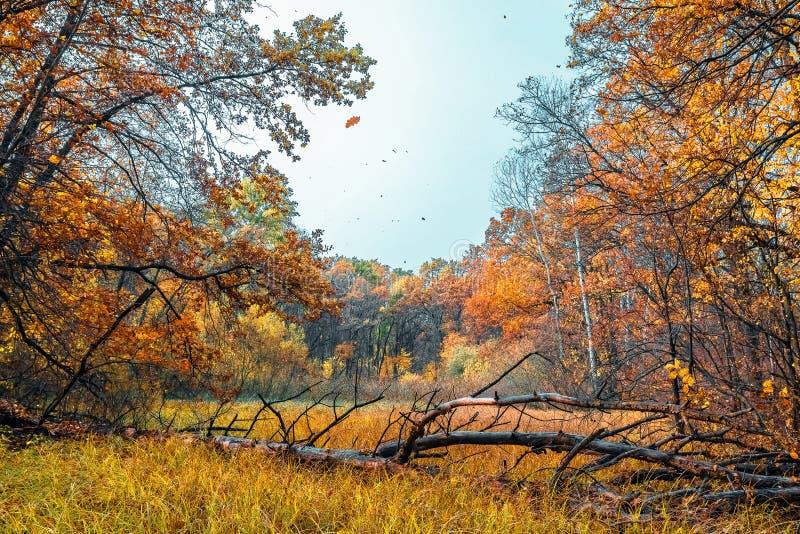 秋天场面在一个森林里,有干燥下落的树的 免版税图库摄影