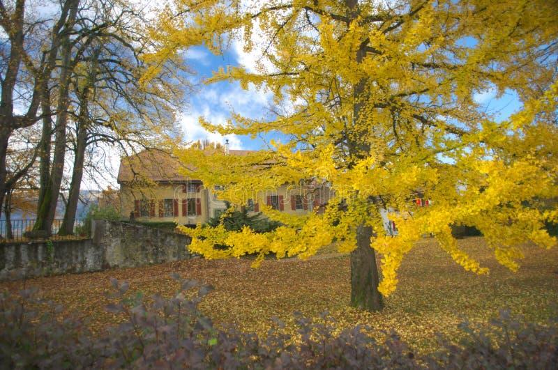 秋天场面在乡下 库存照片