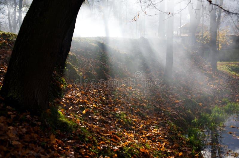 秋天场面风景结构树 免版税库存图片
