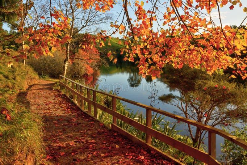 秋天场面:秋叶、走的轨道和湖 免版税库存照片
