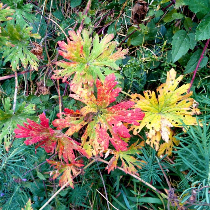 秋天多彩多姿的叶子在草落 库存照片