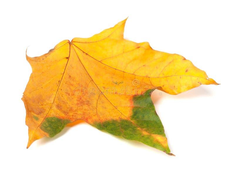 秋天多色枫叶 库存照片