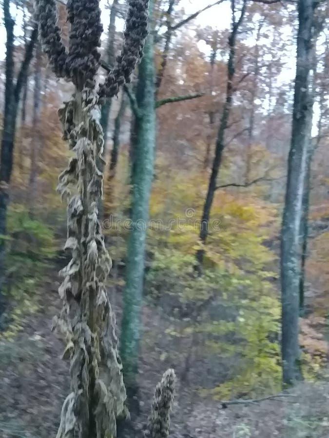 秋天天在克拉克状态森林里 库存照片