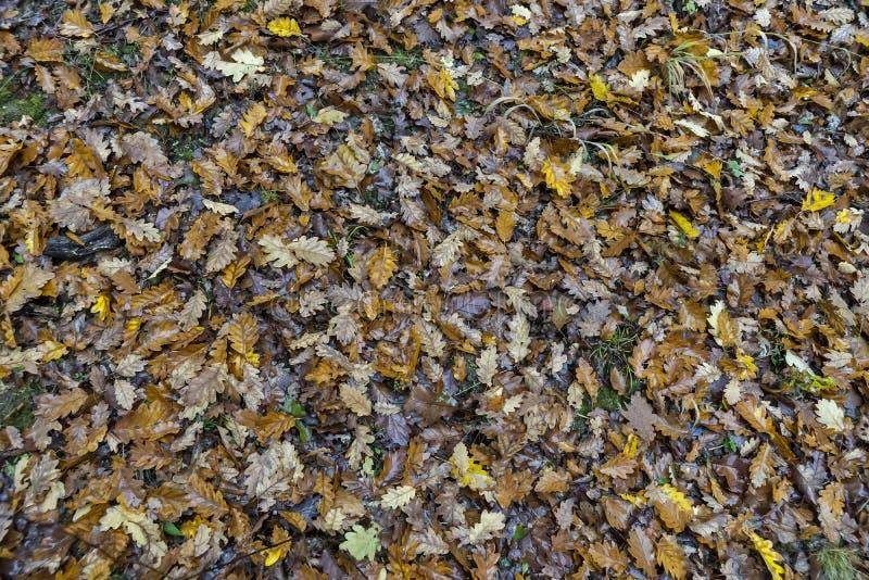 秋天天在森林 免版税库存照片
