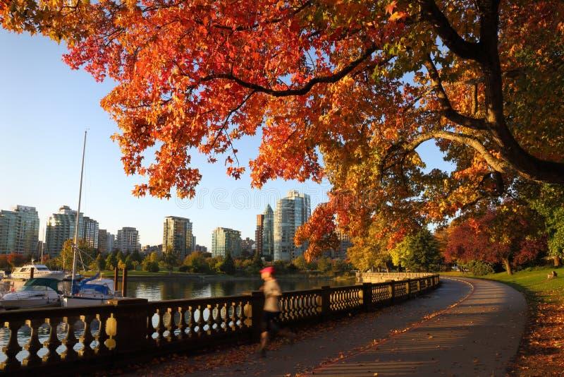 秋天奔跑,史丹利公园防波堤,温哥华 免版税图库摄影