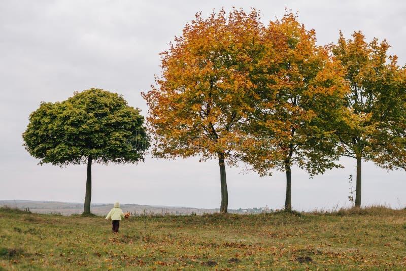 秋天女孩少许公园 叶子花束  城堡 f 库存照片