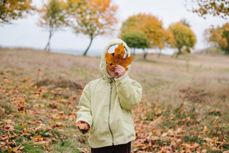 秋天女孩少许公园 在干燥叶子后掩藏的面孔 免版税库存照片
