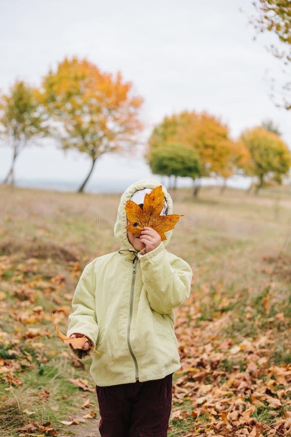 秋天女孩少许公园 在干燥叶子后掩藏的面孔 库存照片