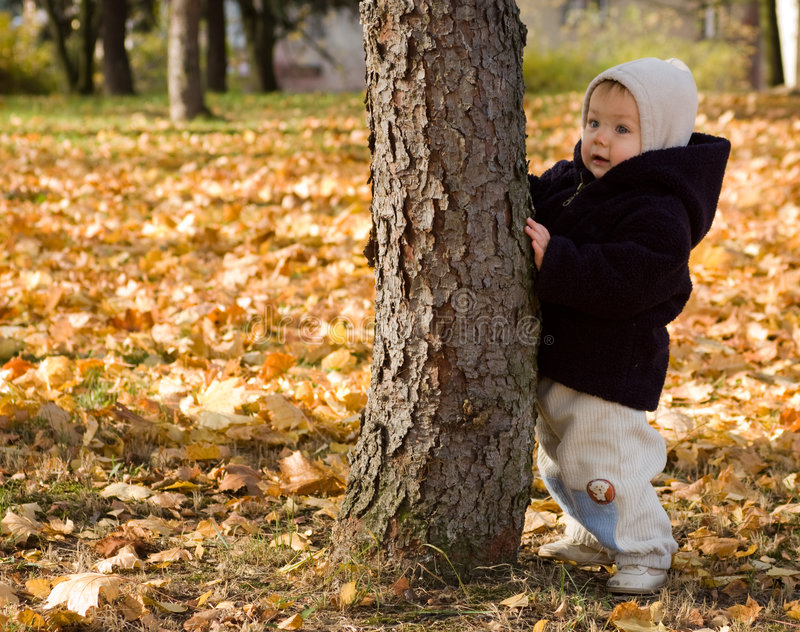 秋天婴儿倾斜的结构树 图库摄影