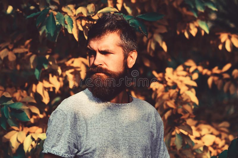 秋天季节和阳刚之气概念 有严肃的面孔的人 库存图片