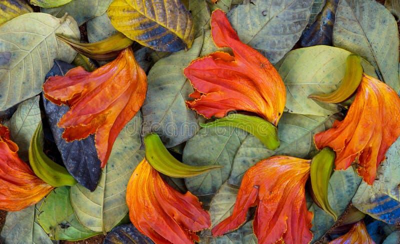 秋天季节在叶子把自然留在的颜色 库存照片