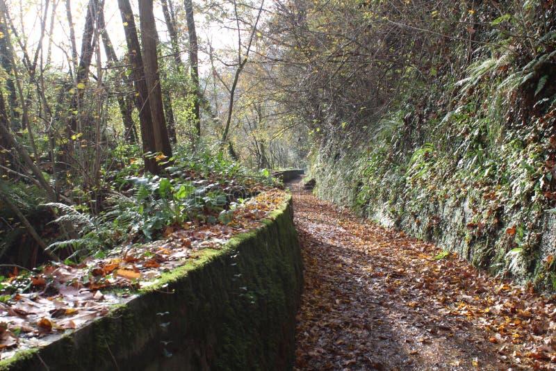 秋天季节在长的途中的叶子视图 库存图片