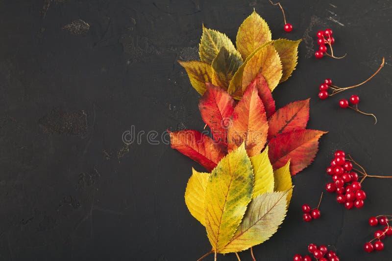 秋天季节性背景,五颜六色的灰叶子 图库摄影