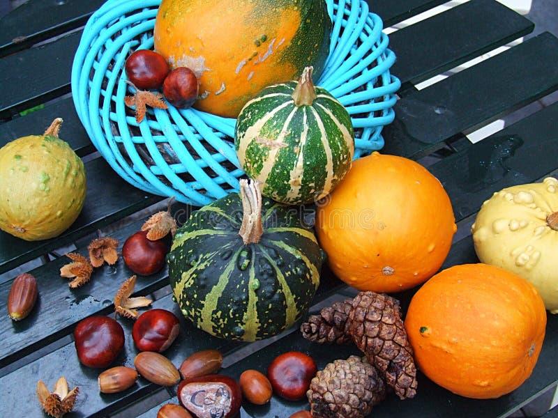 秋天季节性蔬菜 免版税库存照片
