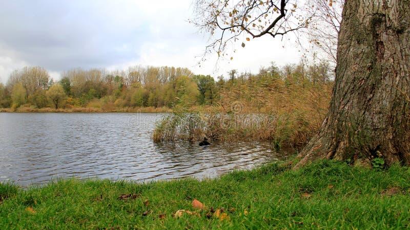 秋天季节有小湖和多云天空看法  免版税库存图片