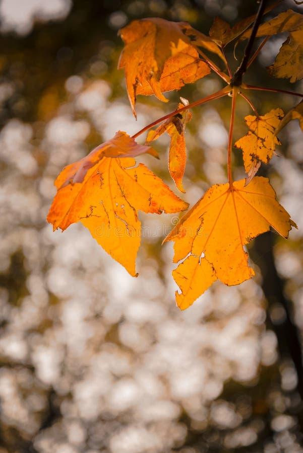 秋天季节温暖的背后照明太阳 图库摄影