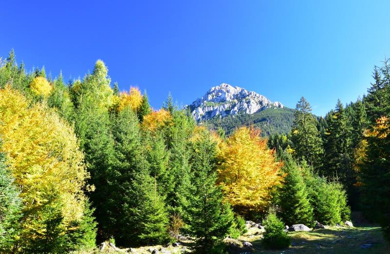 秋天季节的山森林 图库摄影