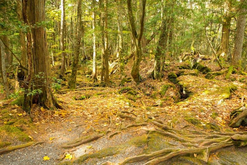 秋天季节的老森林 免版税库存照片