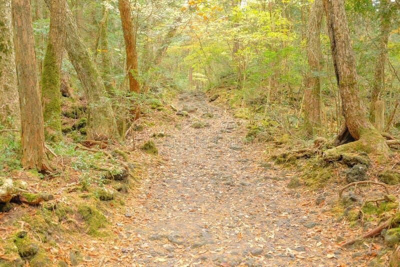 秋天季节的老森林 库存照片