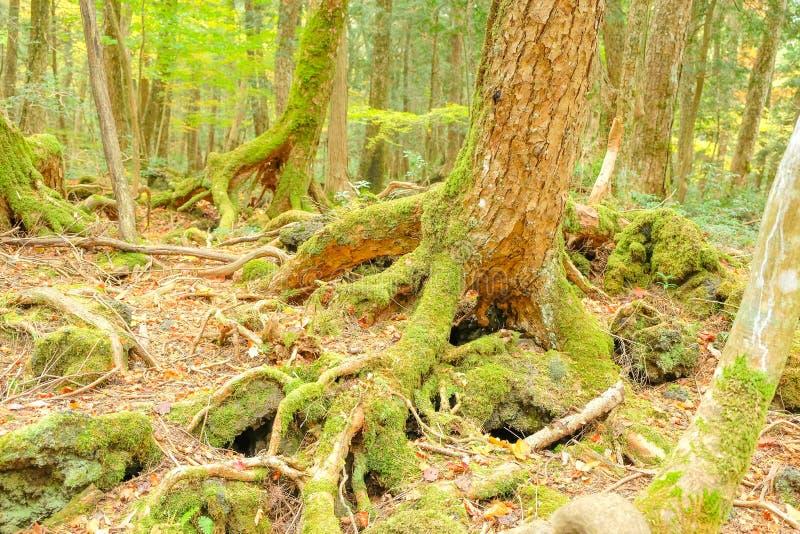秋天季节的老森林 图库摄影