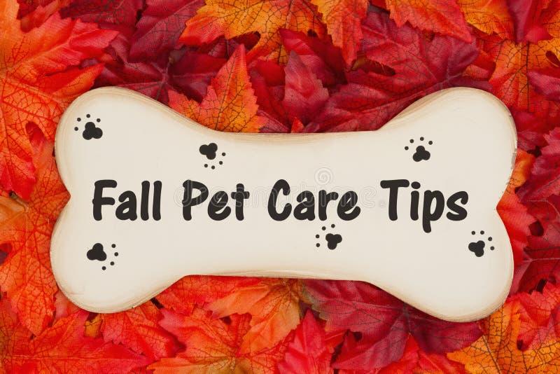 秋天宠物照管在秋天叶子的木狗骨头打翻 免版税库存图片