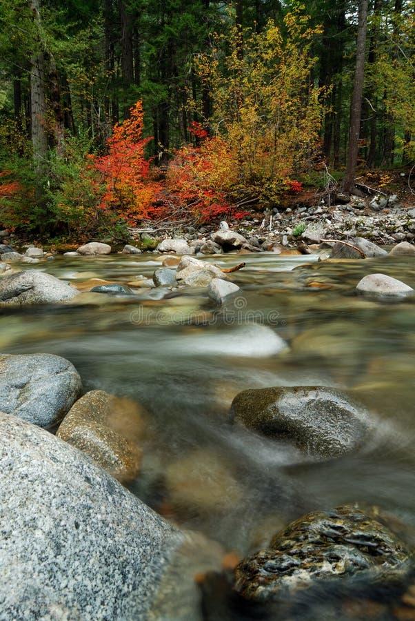 秋天小河离开近 库存照片