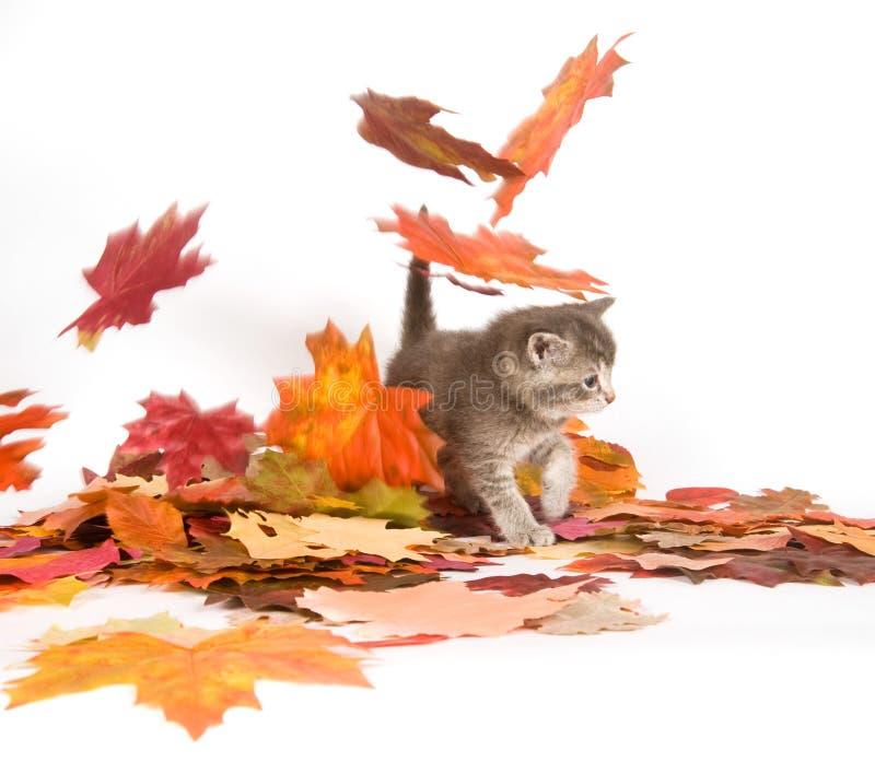 秋天小猫叶子 库存图片