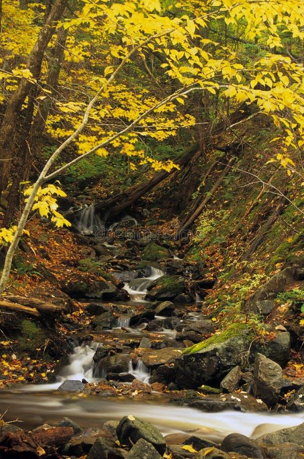 秋天小的瀑布 库存图片