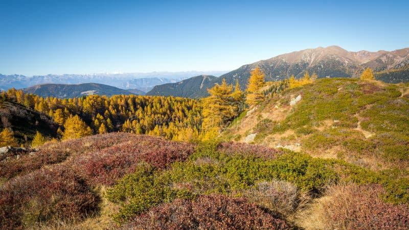秋天山和五颜六色的森林白云岩,特伦托自治省女低音阿迪杰,意大利 库存照片