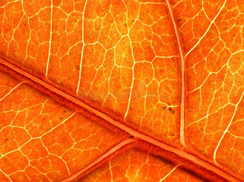 秋天巨大叶子纹理 库存照片