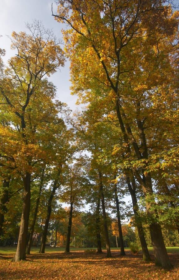秋天巨大的结构树 免版税库存照片