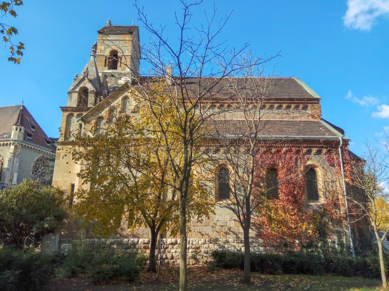 秋天常春藤,一棵黄色树在城堡的背景中 免版税库存照片