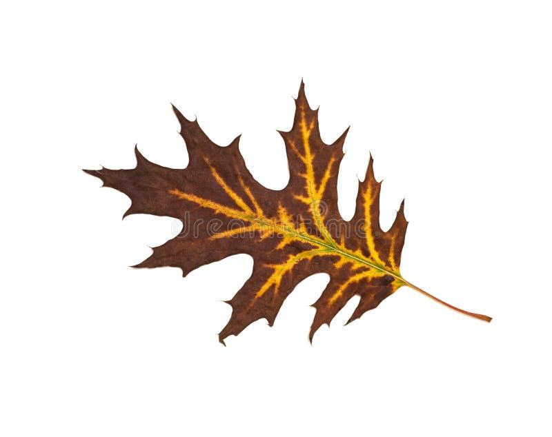 秋天干燥叶子 免版税库存图片