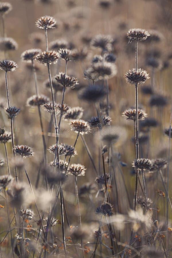 秋天干燥植物和花在草甸 背景 免版税库存图片