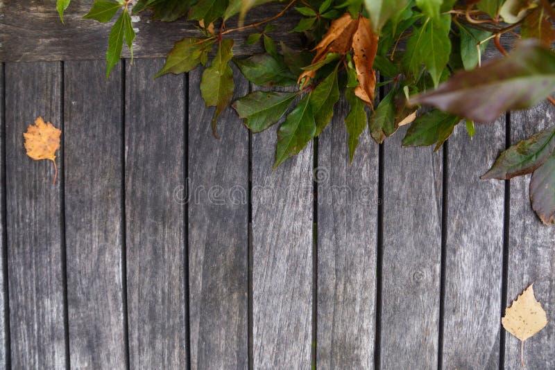 秋天干燥黄色叶子和杉木锥体在木背景 与拷贝空间的木背景 免版税图库摄影