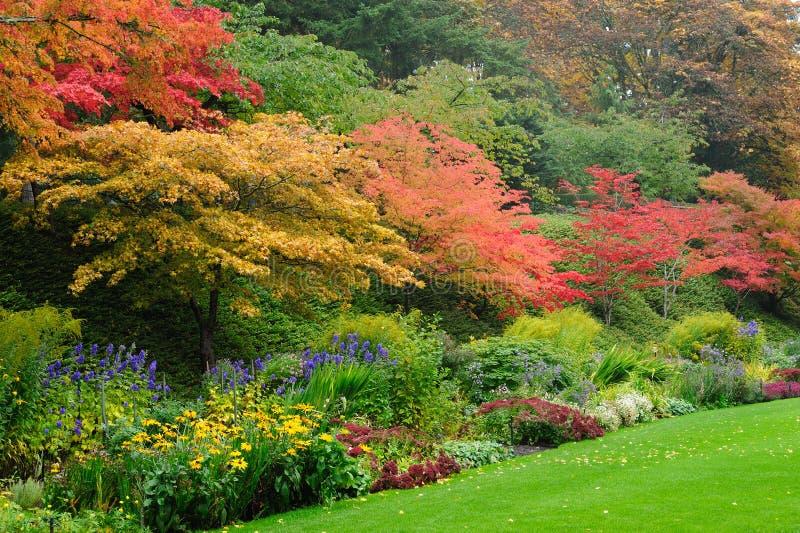 秋天庭院结构树 免版税库存图片