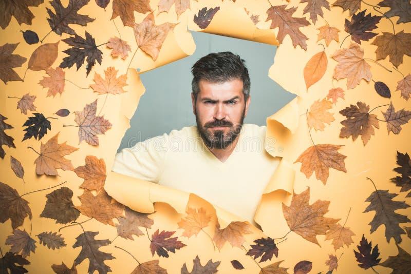 秋天心情和天气是温暖的,并且晴朗和雨是可能的 有获得的胡子的美丽的年轻人与叶子的乐趣 免版税图库摄影