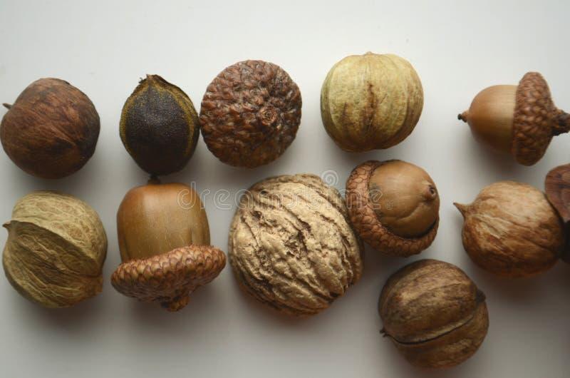 秋天心情 橡子、树坚果和种子与一个杉木锥体和一个礼物被包裹的箱子在包装纸和酒椰与拷贝空间 免版税库存照片