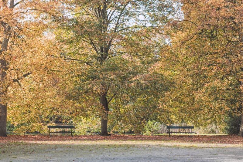 秋天把公园风景换下场 图库摄影