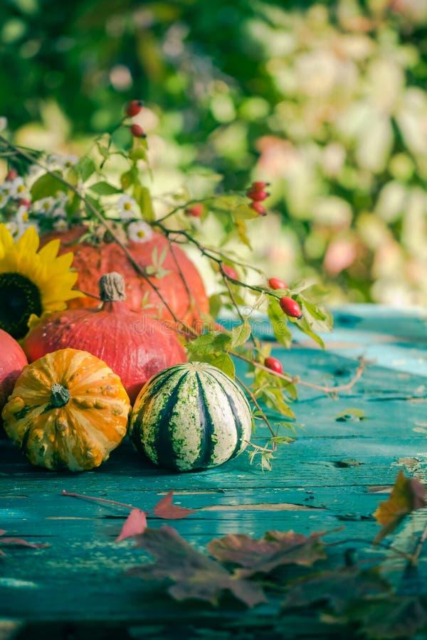 秋天收获庭院南瓜结果实五颜六色的花植物 库存图片