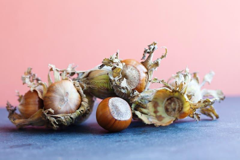 秋天收获成熟榛子榛属最大值 与干叶子的有机欧洲榛树大榛子在石头,桃红色背景 宏观看法, sele 免版税库存照片