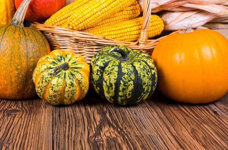 秋天收获节日动机用两个不同戈贡佐拉南瓜和其他在与玉米棒子的一个篮子前面 免版税库存图片