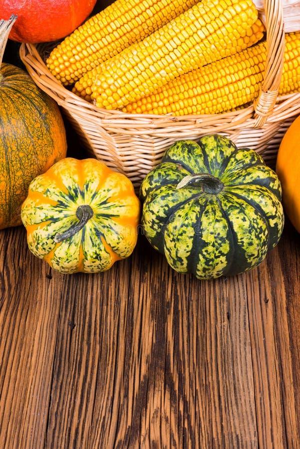 秋天收获节日动机用两个不同戈贡佐拉南瓜和其他在与玉米棒子的一个篮子前面 库存图片