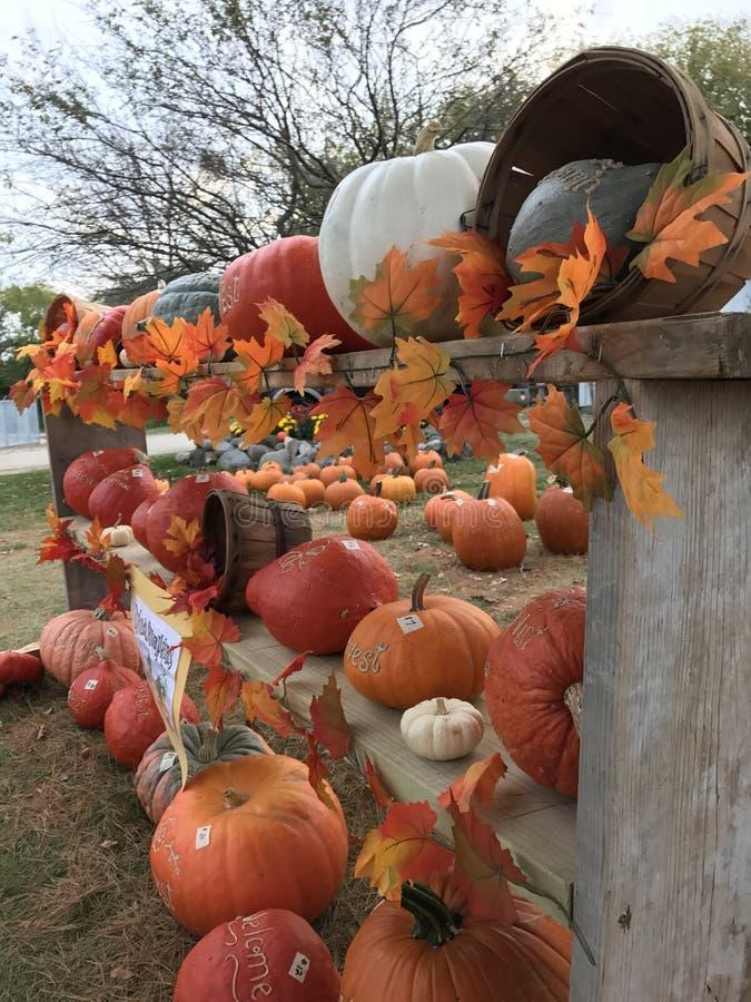 秋天收获 库存照片