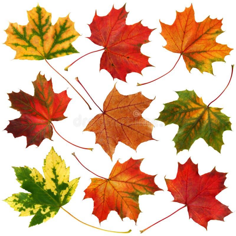 秋天收集叶子 图库摄影